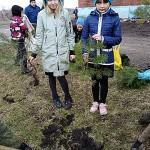 Природоохранная акция по посадке деревьев в Прокопьевске