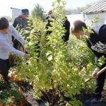 День посадки леса в школе-интернате № 30 из Кемерова