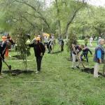 В Новокузнецке стартовал осенний месячник посадки деревьев
