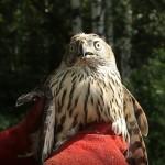 Центру реабилитации диких птиц «Крылья» исполняется 3 года