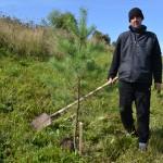 В Осинниках высаживали лес